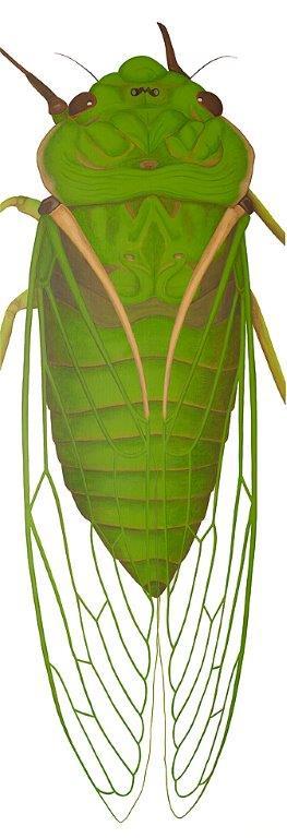 Cicada - Original SOLD