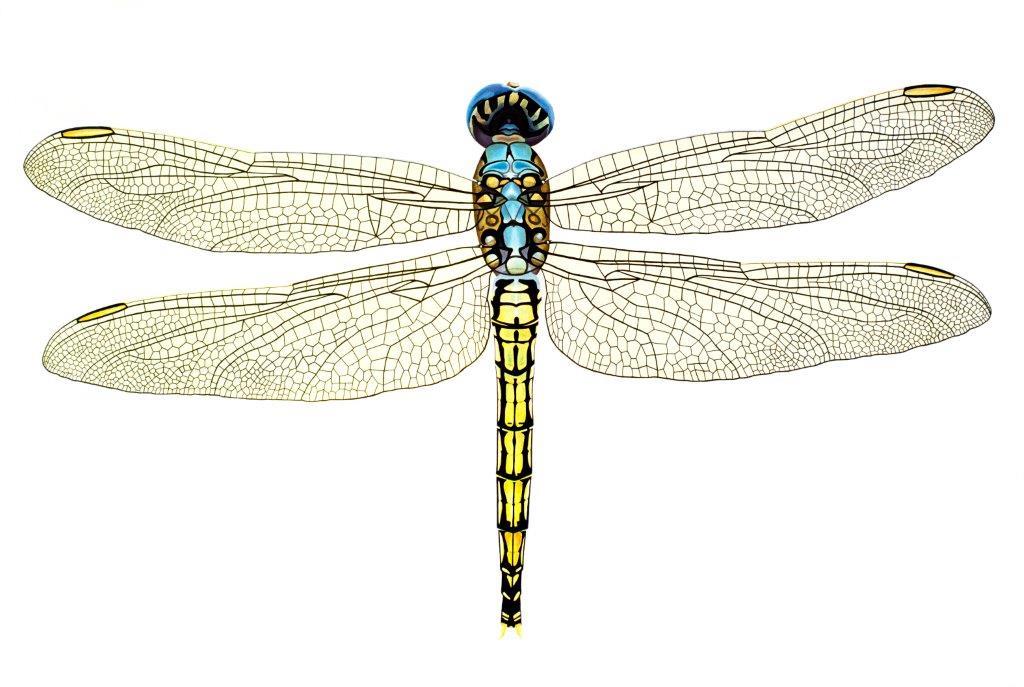 Dragonfly - Original SOLD