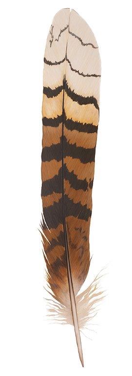 Kookaburra feather - Original SOLD