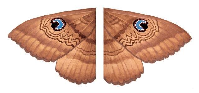 Moth - Original SOLD