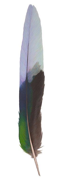 Twenty-eight feather - Original SOLD